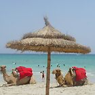Camels on the beach by Caroline Clarkson