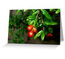 Pomegranate heaven  Greeting Card
