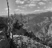 Grand Canyon of the Tuolumne - Yosemite N.P. by Rodney Johnson