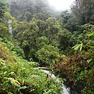 Cloud Forest Waterfalls by Robbie Labanowski