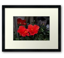 Hibiscus Relations Framed Print