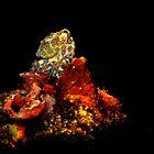 Blue Ring Octopus by Bo Mancao