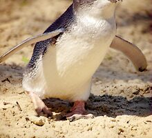 Little Penguin by Tamara  Kenneally