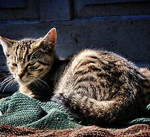 Grumpy cat by creamneuron