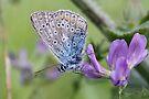 Mister Blue Loves Purple by Jo Nijenhuis