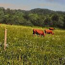 Cattle Grazing  by © Bob Hall