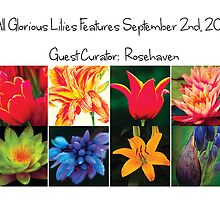 All Glorious Lilies Features Sep 2nd, 2012 Guest Curator:  Rosehaven by Marilyn Cornwell