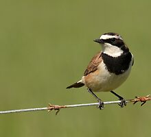 Bird on a Wire..... by Macky