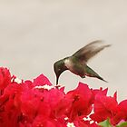 hummingbird and flower in mexico by holljw