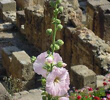 Hollyhocks and History by Paula Swenson