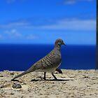 Bird Envy by Adam Kuehl
