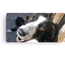 Happy With a Hint of Madness Canvas Print