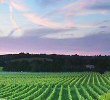 Surrey Landscapes by Craig Denford