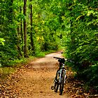 The Bike on the Towpath by Debra Fedchin