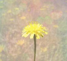 Dandelion by Jess Meacham