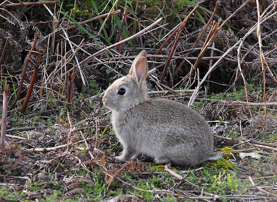 Baby Bunny by Kayleigh Walmsley