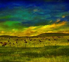 Cows In the Pasture by Vickie Emms