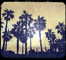 Palms by geophotographic