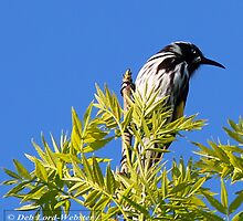 Honey Eater by DiverDeb