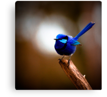 Bluey came to visit Canvas Print