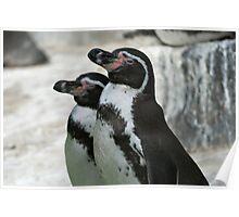 Humboldt Penguins Poster