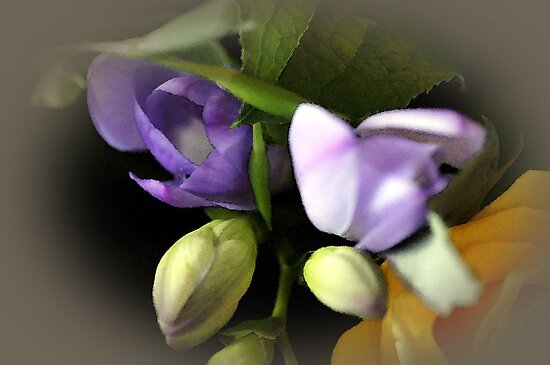 Freesia buds by Joyce Knorz