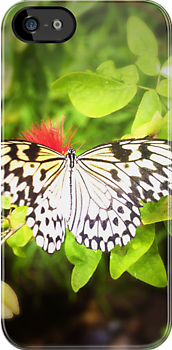 The Butterfly (Lomography) by Joel Stone