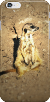 The Meerkat (Lomography) by Joel Stone