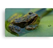 Frog! Canvas Print