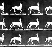 A Study of the Movement of Centaurs (Canter). by Steve Campbell