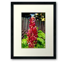 Red flower spike Framed Print