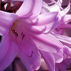 Lilies by Jess Meacham
