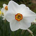 Narcissus by CliffordV