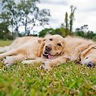 It's a Dog's Life by kraMPhotografie