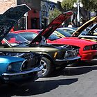 Row of Mustangs by Norma  Ledesma