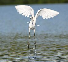 the take off by kathy s gillentine