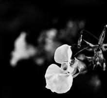 Untitled by PekkaPee