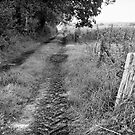 Track to the farm by Gary Heald LRPS