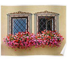 Flower Burst & Windows. Poster