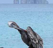 Brown pelican 3. by Anne Scantlebury
