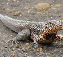 Land iguana on Santa Cruz. by Anne Scantlebury