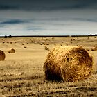 Harvest Time by Ryan Carter