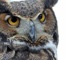 Owl be seeing you by CcoatesPhotos