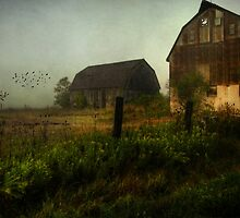 Harvest Dawn by Susan  Kimball