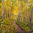 Landscape Painting - Kenosha to Breckenridge Trail - 30&quot; x 30&quot; Oil by Daniel Fishback