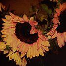 Sunflower Texture by HeavenOnEarth