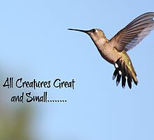All Creatures Great and Small by DebbieCHayes
