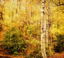 The Woodland by Lucinda Walter