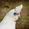 White Bird Challenge by Steve Randall