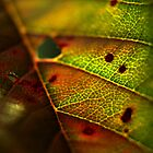 Weeping Cherry Leaf by Andrea Brooks